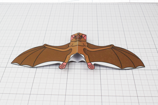 PTI Halloween Vampire Bat Paper Toy Image from Twinkl - Bottom