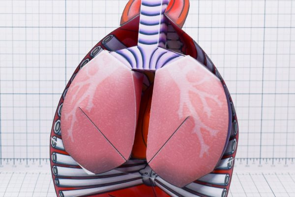 PTI - Circulatory System Paper Craft - Main
