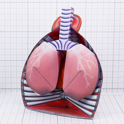THU - Circulatory System Paper Craft - Thumbnail