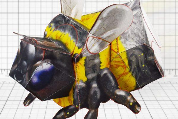 PTI-Wilflife Charity - Bee Main