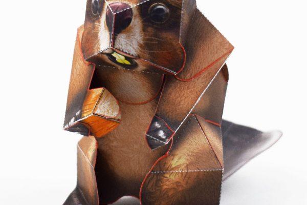 PTI-Wilflife Charity - X Beaver 2