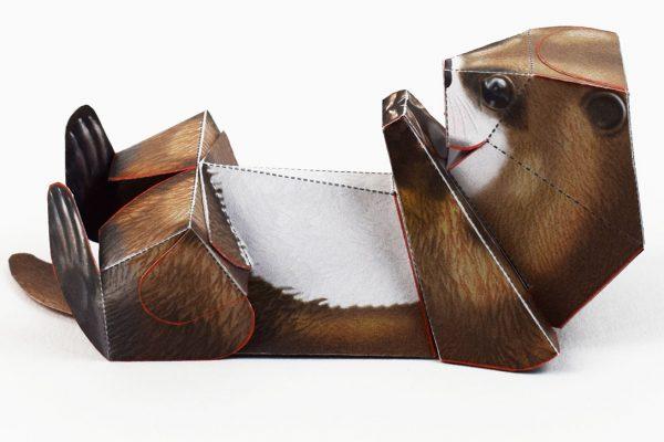 PTI-Wilflife Charity - X Otter 1