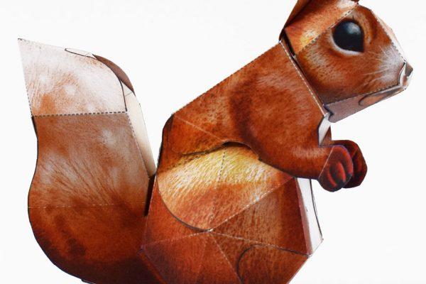 PTI-Wilflife Charity - X Squirrel 2