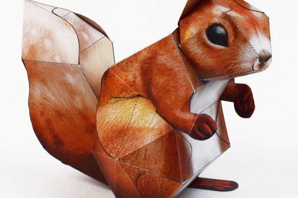 PTI-Wilflife Charity - X Squirrel 3